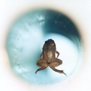 Floating Frog good pix for video thumbnail